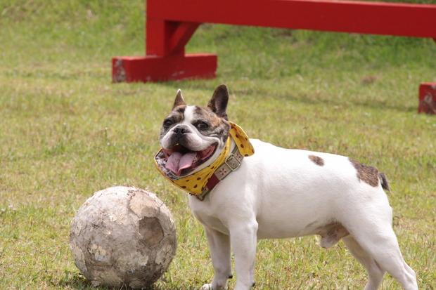 サッカーW杯に学ぶ