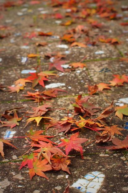 木の葉色づく頃