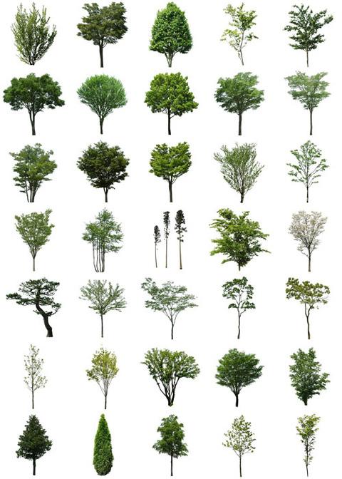 ツバキ・松の樹木素材無料