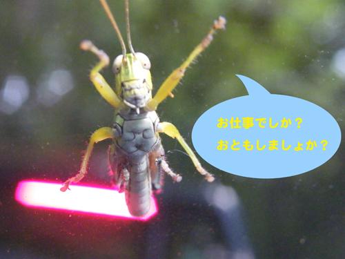 Grasshoppar2