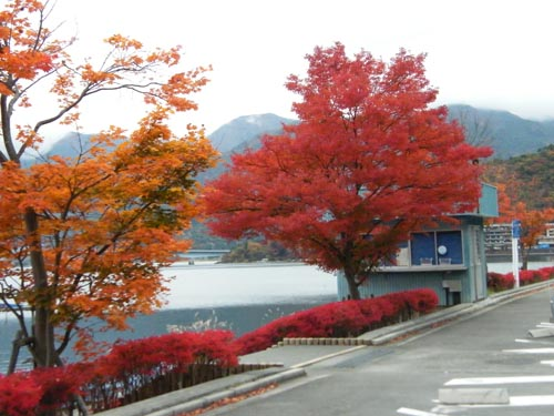 Red Leaves2