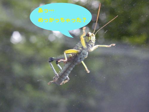 Grasshoppar1