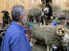 マザー牧場 羊