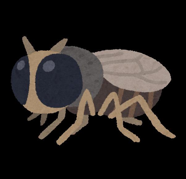 bug_buyo