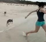動画:小さなカンガルーと戯れる [ほのぼの]