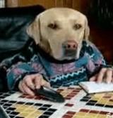 動画:人間らしい犬 [おもしろ]