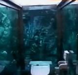 動画:水族館なトイレ [感動]