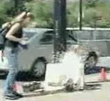 動画:ドッキリ -犬が感電死した- [おもしろ]