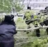 動画:木vs警察官 [おもしろ]