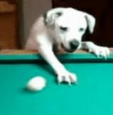 動画:犬 -ビリヤードをする犬- [感動]