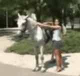 動画:ドッキリ -馬に乗りたいの- [エロ]
