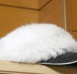 画像:ふわふわな帽子の秘密 [ほのぼの]