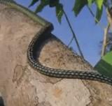 動画:空飛ぶ蛇 [衝撃]
