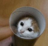 GIF:猫と筒 [ほのぼの]