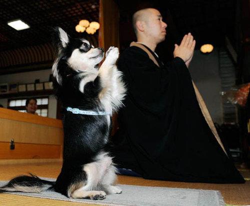 画像:お坊さんと犬 [ほのぼの]