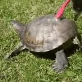 動画:自ら甲羅を磨く亀 [ほのぼの]