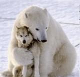 画像:白熊と犬の友情 [ほのぼの]