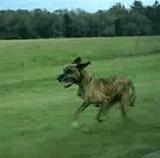 GIF:外で走ってる犬に対しこちらの犬が・・・ [衝撃]