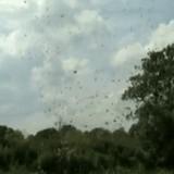 動画:草で見える竜巻 [衝撃]