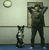 動画:犬 -ご主人さまと一緒に筋トレをする犬- [ほのぼの]