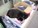 黒ネコ寝んね