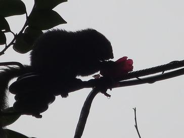 花食らふ栗鼠