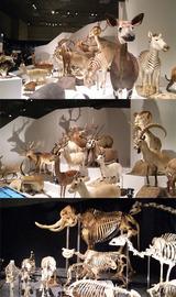 哺乳類いっぱい