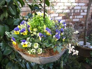 ハンギングアンブレラ by plants*kitchen