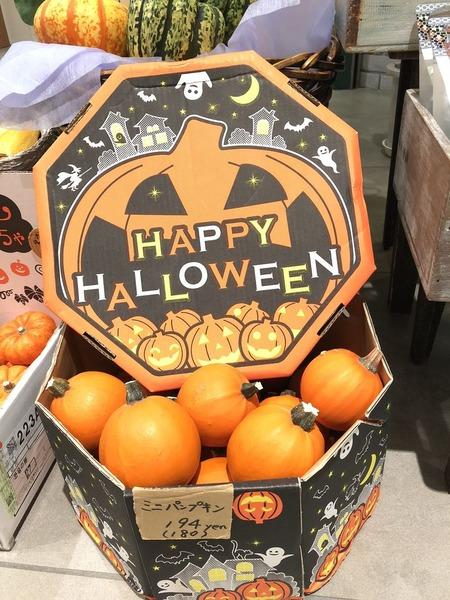 かぼちゃ52018