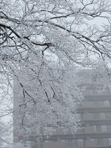 枝に雪が降り積もる