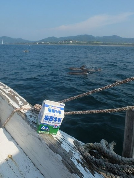天草のイルカと一緒に堀田牛乳を撮ってみた。