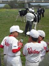 お前、どの牛が一番になると思うやぁ?