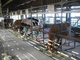 牛舎にはホルスタインとジャージーがいます