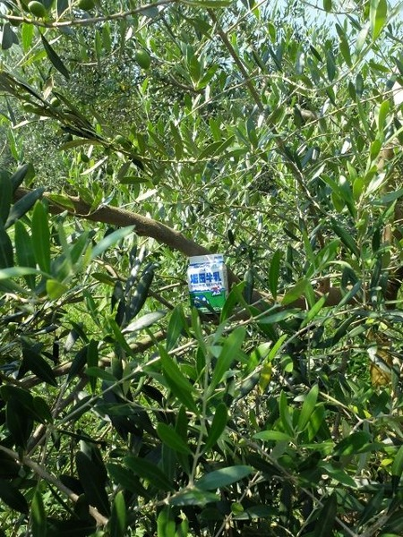 天草オリーブ園で堀田牛乳を撮ってみた。