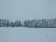 一面の雪景色です。