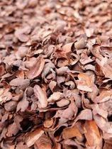 カカオ殻とコーヒー粕を敷料に使用