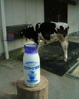 この子牛から搾った牛乳じゃないんだけどねw