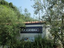 天草オリーブ園