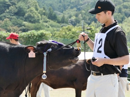 第1回福岡県肉用種牛共進会