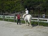 馬さんには乗ることができます