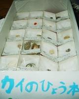 朝倉2号Jr.の「カイのひょう本」