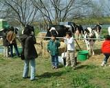 牛さんと一緒に記念写真