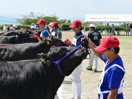 第1回福岡県肉用種牛共進会2