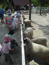 羊さんや山羊さんとのふれあいコーナーもあります