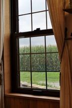 窓からトウモロコシ畑が。