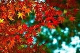 紅葉 写真2