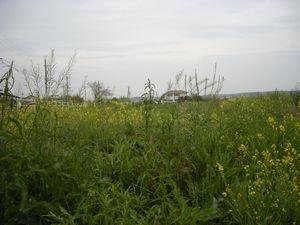 20080501_08.JPG