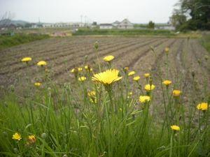 20080501_06.JPG