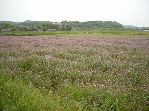20080501_07.JPG