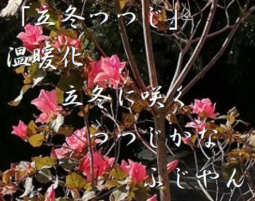 20181107tsutsuji